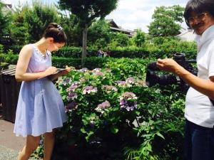 NHK, Haruka, Hortensie